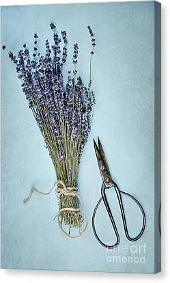 Canvas Print featuring the photograph Lavender And Antique Scissors by Stephanie Frey