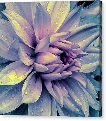 Canvas Print featuring the photograph Lavender And Pink Dahlia And Water Drops by Julie Palencia