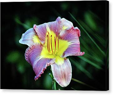 Lavender And Yellow Lily Canvas Print