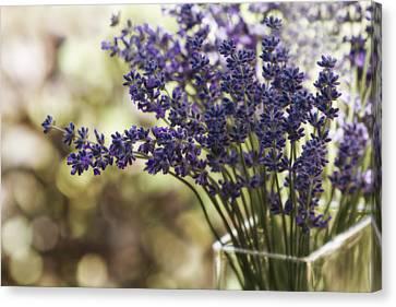 Lavender Bokeh Canvas Print