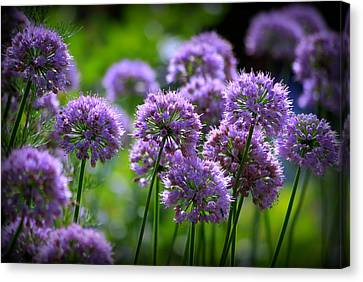 Lavender Breeze Canvas Print by Linda Mishler