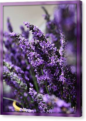 Lavender Canvas Print by Cathie Tyler