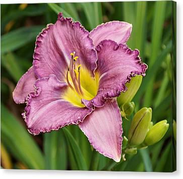 Western Kentucky Canvas Print - Lavender Daylily  by Sandy Keeton