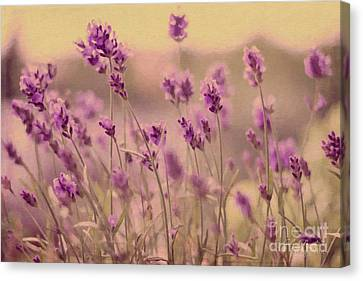 Lavender Dreaming ... Canvas Print by Chris Armytage