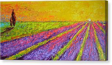 Lavender Dreams Canvas Print by Patricia Awapara