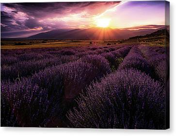 Lavender Field At Sunset Canvas Print