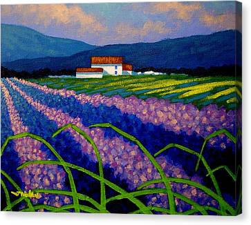 Lavender Field France Canvas Print by John  Nolan