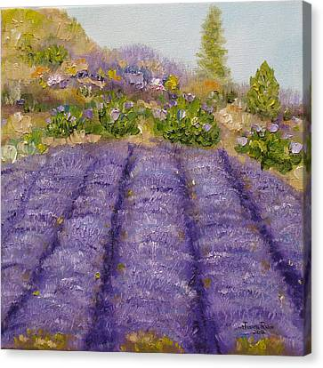 Lavender Field Canvas Print by Judith Rhue