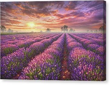 Lavender Field Canvas Print by Phil Jaeger