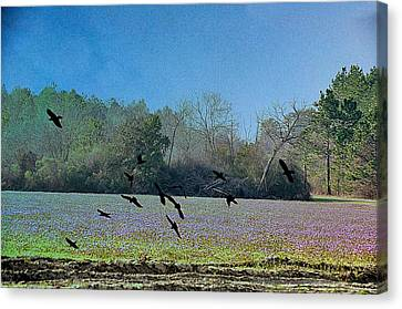 Country Scene Canvas Print - Lavender Fields Aglow by Jan Amiss Photography