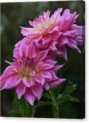 Canvas Print featuring the photograph Lavender Fields Bouquet by Robert Pilkington
