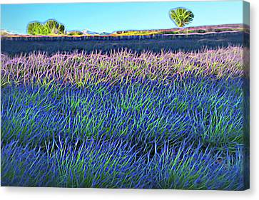 Lavender Fileds Canvas Print by Christian Heeb