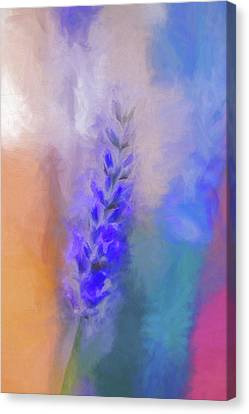 Lavender Flare Canvas Print by Terry Davis