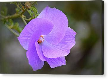 Canvas Print featuring the photograph Lavender Flower by AJ Schibig