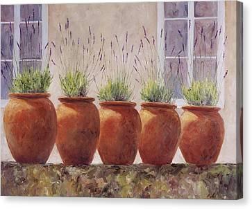 Lavender Garden Canvas Print by Jill Musser