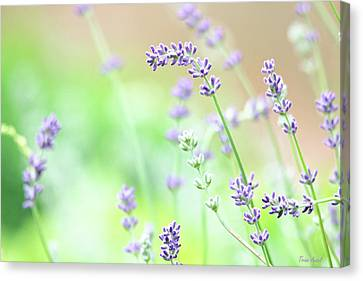 Canvas Print featuring the photograph Lavender Garden by Trina Ansel