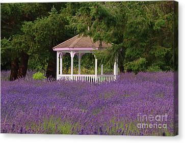 Lavender Gazebo Canvas Print