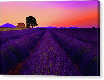 Abandoned House Canvas Print - Lavender Home by Midori Chan