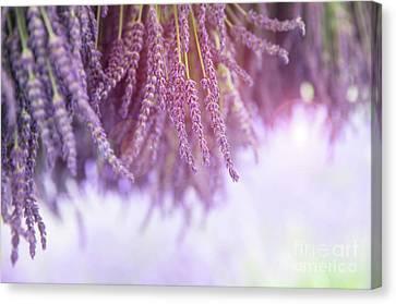 Lavender Canvas Print by Jane Rix