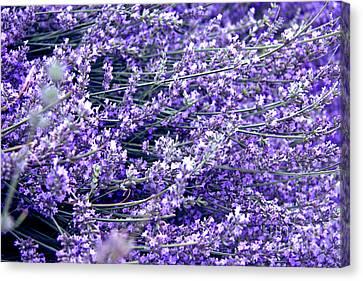 Tbilisi Canvas Print - Lavender by Lali Kacharava