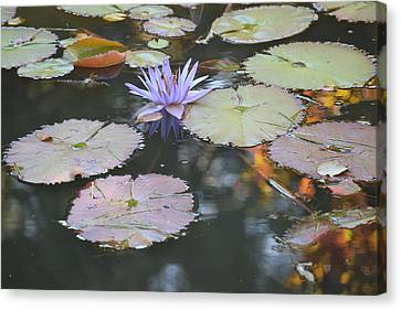 Lavender Lily And Autumn Reflection Canvas Print by Dawn Richerson
