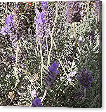 Canvas Print featuring the digital art Lavender Moment by Winsome Gunning
