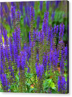 Canvas Print featuring the digital art Lavender Patch by Chris Flees