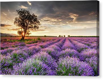 Lavender Sunrise Canvas Print by Evgeni Dinev