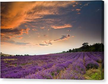 Lavender Sunset Canvas Print by Evgeni Dinev