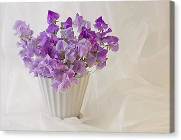 Lavender Sweet Peas And Chiffon Canvas Print by Sandra Foster