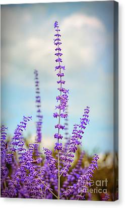 Canvas Print featuring the photograph Lavender To The Sky by Kerri Farley