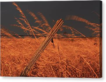 Canvas Print featuring the photograph Lay Me Down In Golden Pastures by Marion Cullen