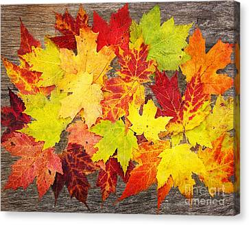 Layered In Leaves Canvas Print by Kathi Mirto