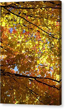 Canvas Print featuring the photograph Layers Of Autumn by Corinne Rhode