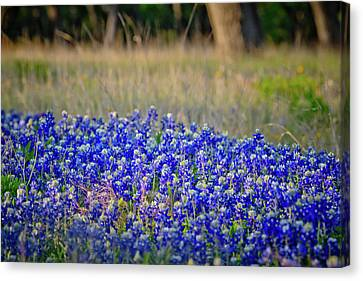 Canvas Print featuring the photograph Layers Of Blue by Linda Unger