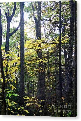 Layers Of Fall Canvas Print