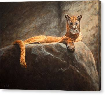 Laying Cougar Canvas Print