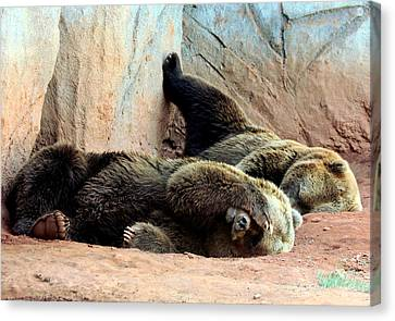 Canvas Print featuring the photograph Lazy Bears by Sheila Brown