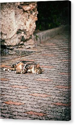 Canvas Print featuring the photograph Lazy Cat    by Silvia Ganora