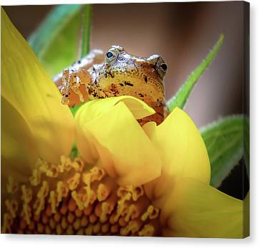 Lazy Days Canvas Print by Karen Wiles