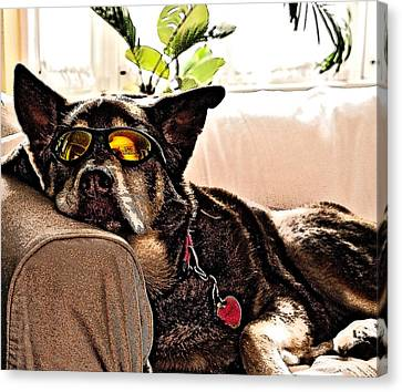 Lazy Dog Canvas Print by Jim DeLillo