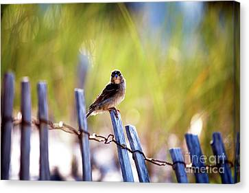 Canvas Print featuring the photograph Lbi Beach Bird by John Rizzuto