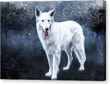 Le Loup Blanc Canvas Print by Joachim G Pinkawa