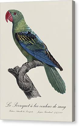 Le Perroquet A Bec Couleur De Sang / Great-billed Parrot - Restored 19thc. Illustration By Barraband Canvas Print by Jose Elias - Sofia Pereira