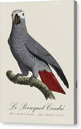 Le Perroquet Cendre / African Grey Parrot - Restored 19th Century Illustration By Jacques Barraband Canvas Print by Jose Elias - Sofia Pereira
