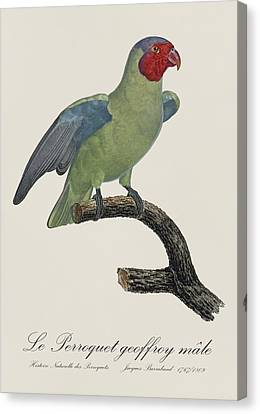 Le Perroquet Geoffroy Male / Red Cheeked Parrot - Restored 19th C. By Barraband Canvas Print by Jose Elias - Sofia Pereira