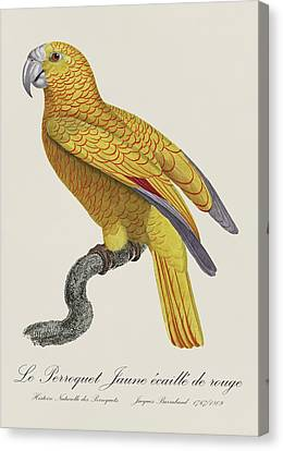 Le Perroquet Jaune Ecaille De Rouge - Restored 19th Century Parrot Illustration By Jacques Barraband Canvas Print by Jose Elias - Sofia Pereira