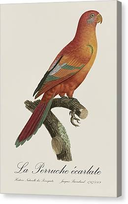 Le Perruche Ecarlate - Restored 19th Century Parakeet Illustration By Jacques Barraband Canvas Print by Jose Elias - Sofia Pereira