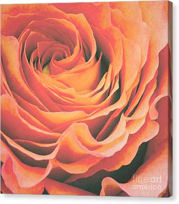 Le Petale De Rose Canvas Print by Angela Doelling AD DESIGN Photo and PhotoArt