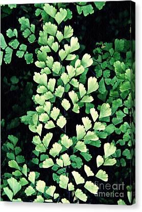 Leaf Abstract 15 Canvas Print by Sarah Loft